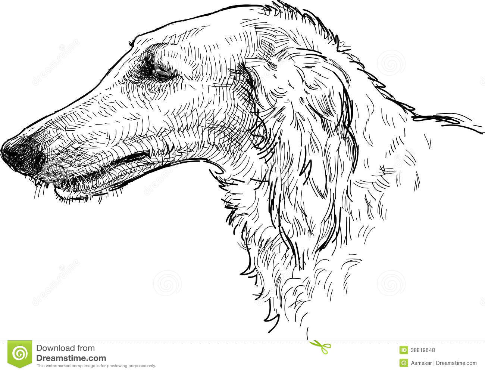 Greyhound Head Stock Vector Illustration Of Hunting
