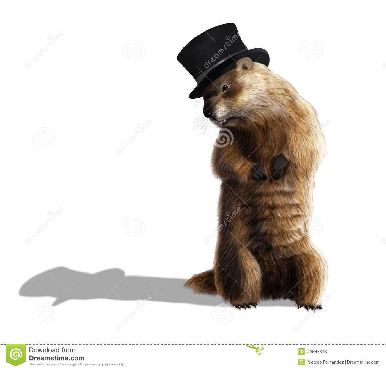Groundhog Stock Illustration