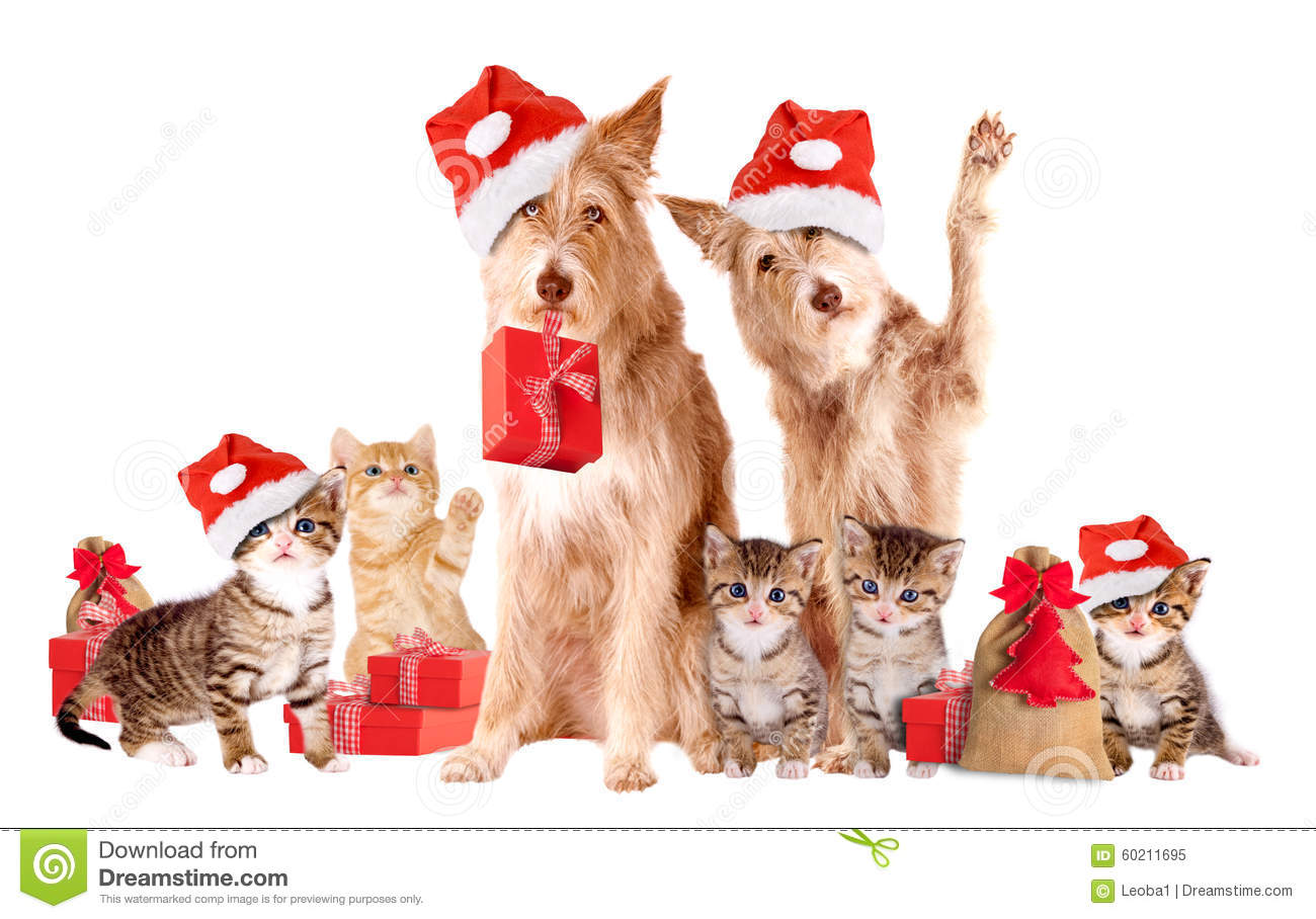 Group Of Animals With Santa Hats And Presents Stock Image