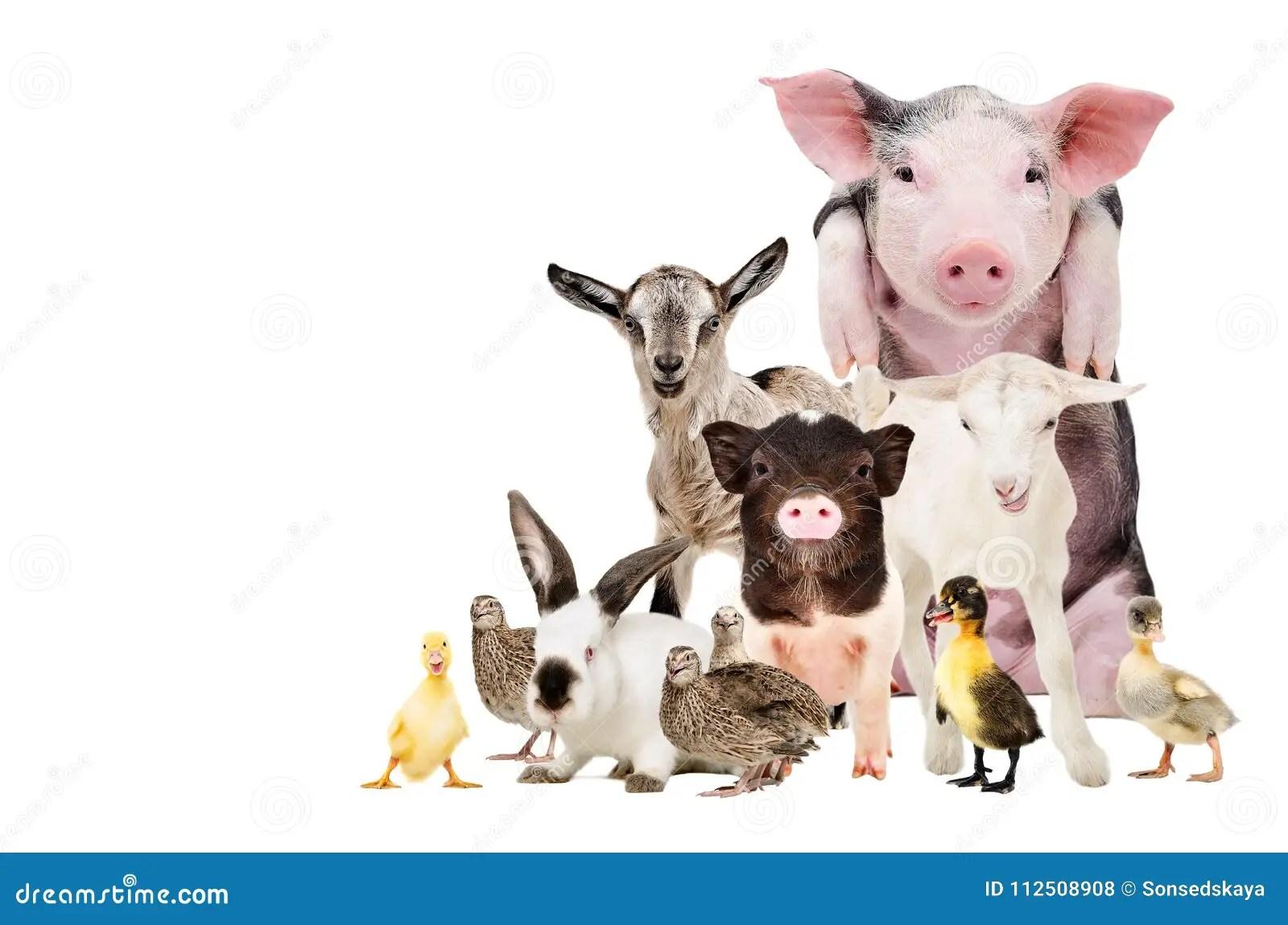 Group Of Cute Farm Animals Stock Photo Image Of Farm