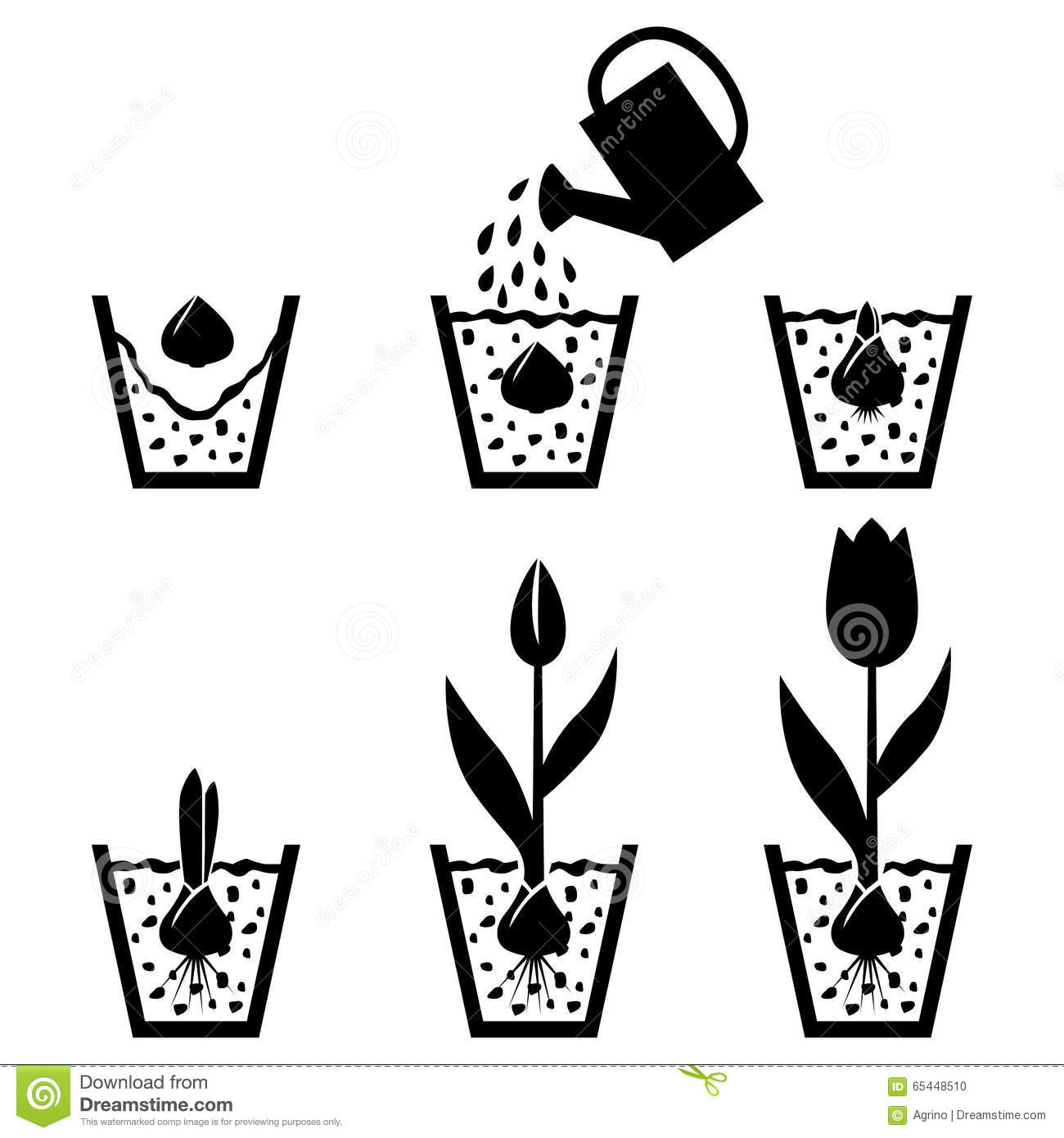 Growth Cycle Tulip In Pot Stock Vector Illustration Of
