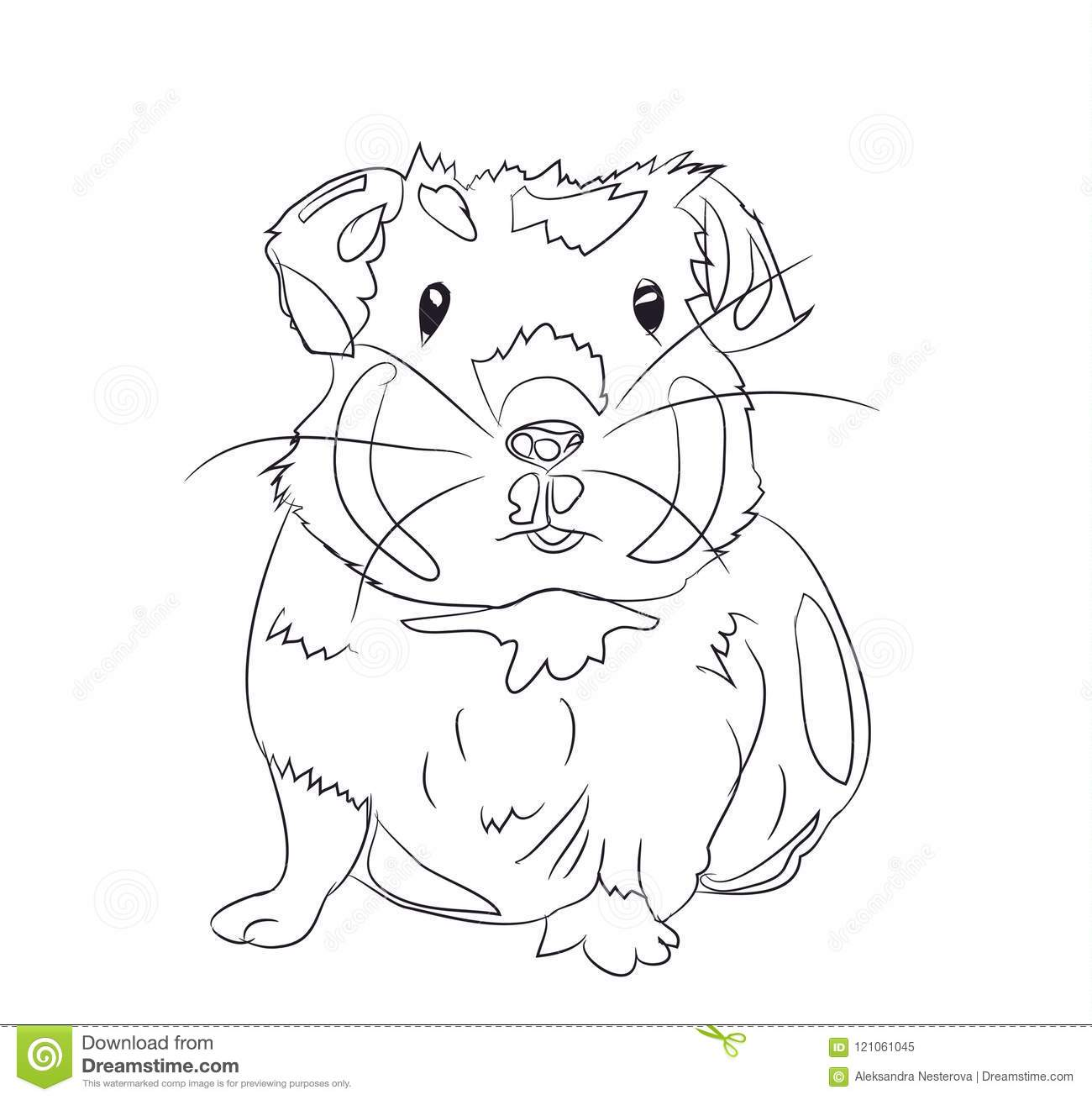 Guinea Pig Lines Vector Stock Vector Illustration Of