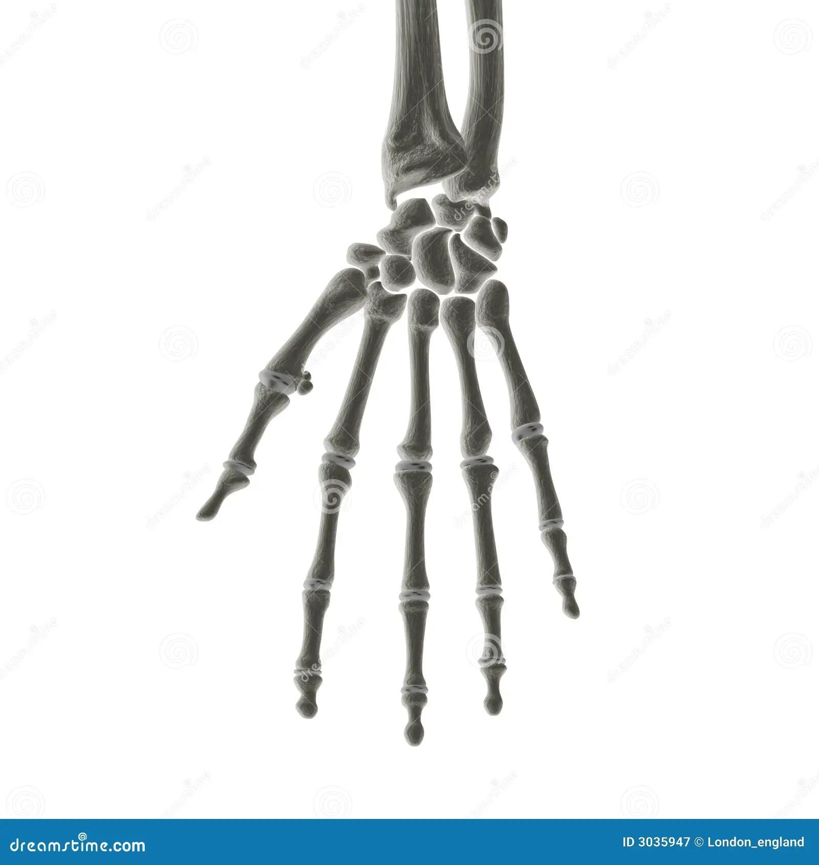 Hand Bones X Ray Royalty Free Stock Photography