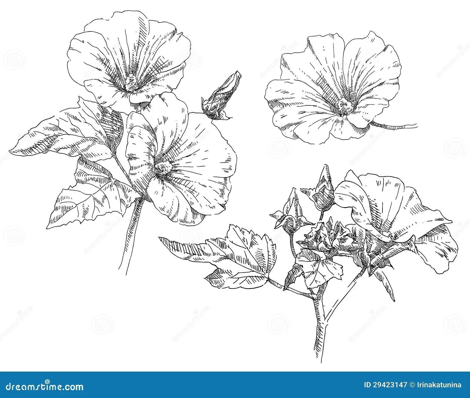 Hand Drawing Flower Stock Vector Illustration Of