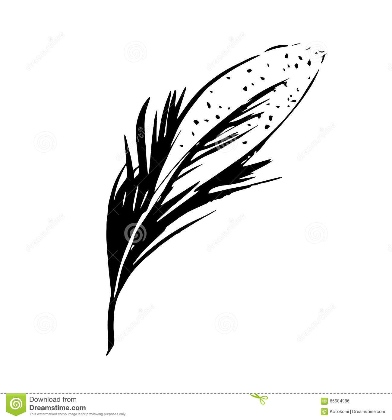 Hand Drawn Bird Feather Symbol Of Knowledge Writing And
