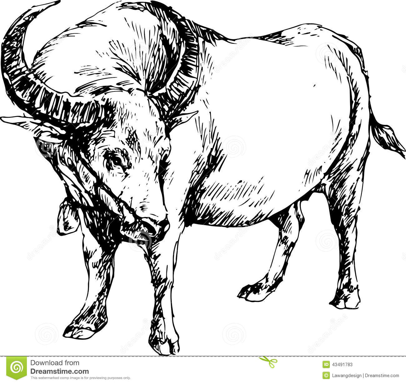 Hand Drawn Buffalo Stock Vector