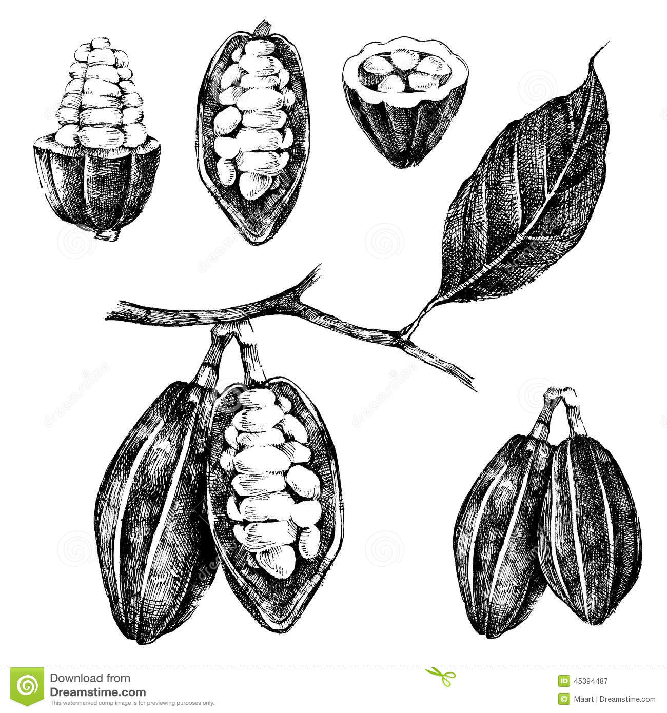 Hand Drawn Cocoa Beans Set Stock Vector