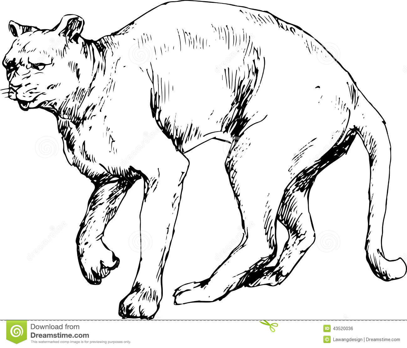 Hand Drawn Cougar Stock Vector Image Of Clipart Isolated