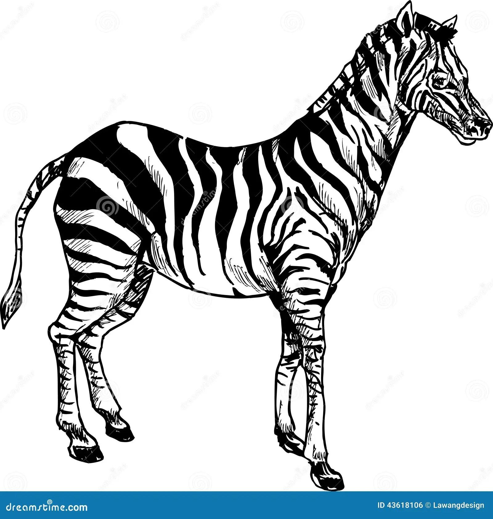 Hand Drawn Cute Zebra Cartoon Stock Vector