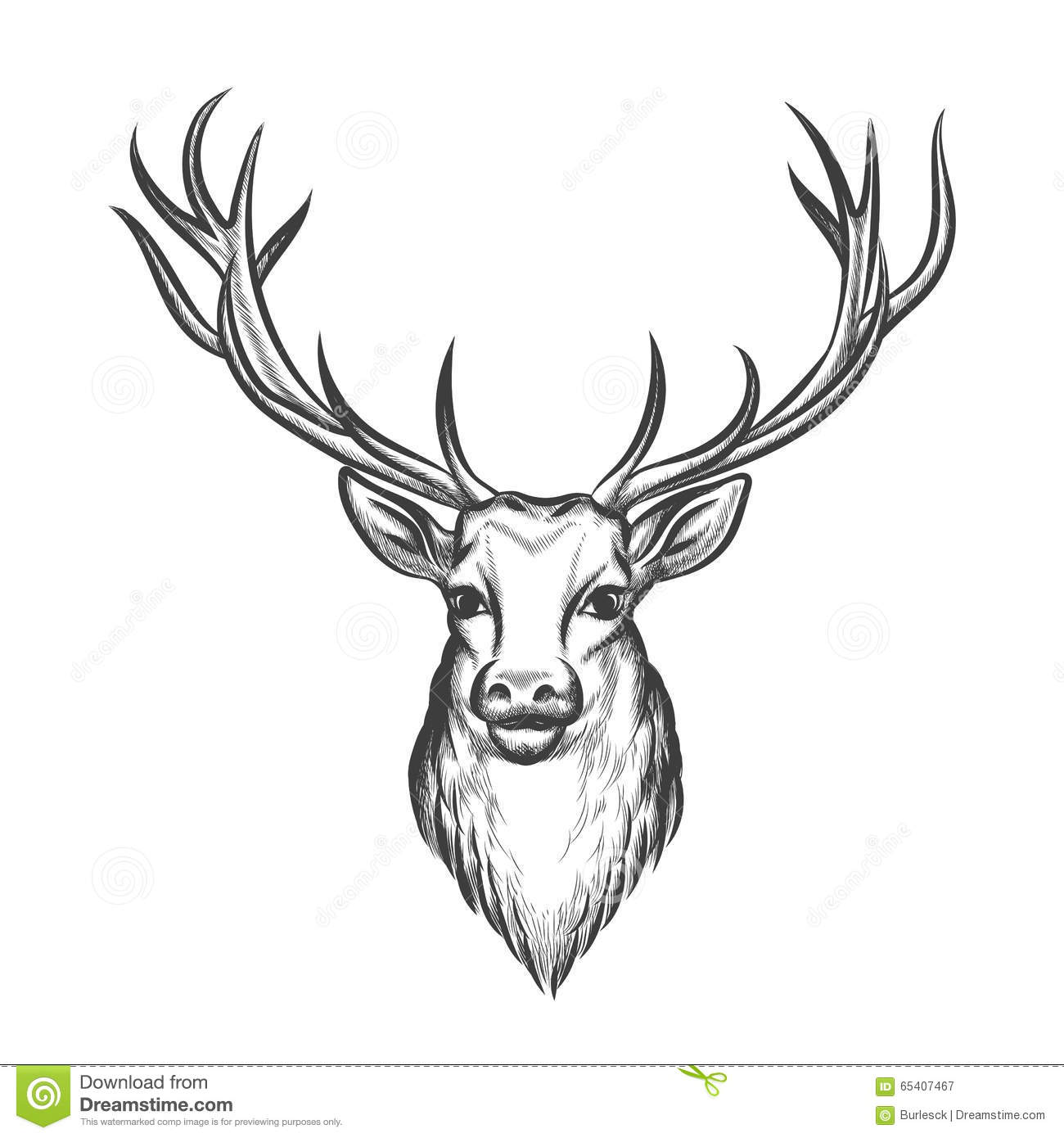Hand Drawn Deer Head Stock Vector Illustration Of