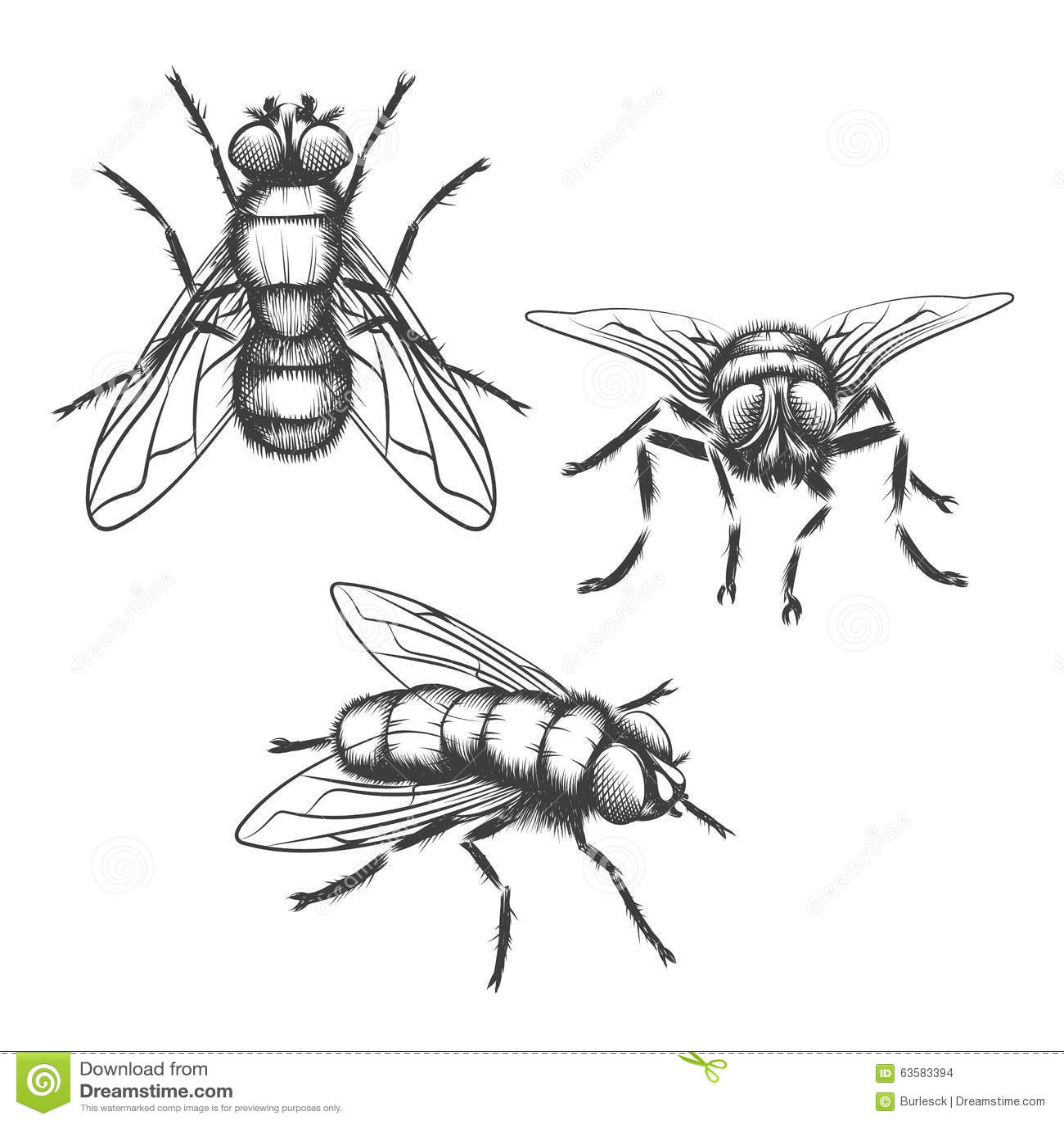 Hand Drawn Flies Stock Vector Illustration Of Biology