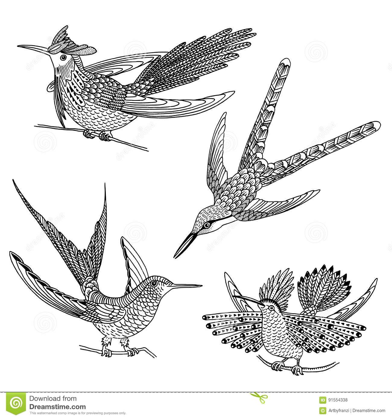 Black And White Images Of Hummingbirds