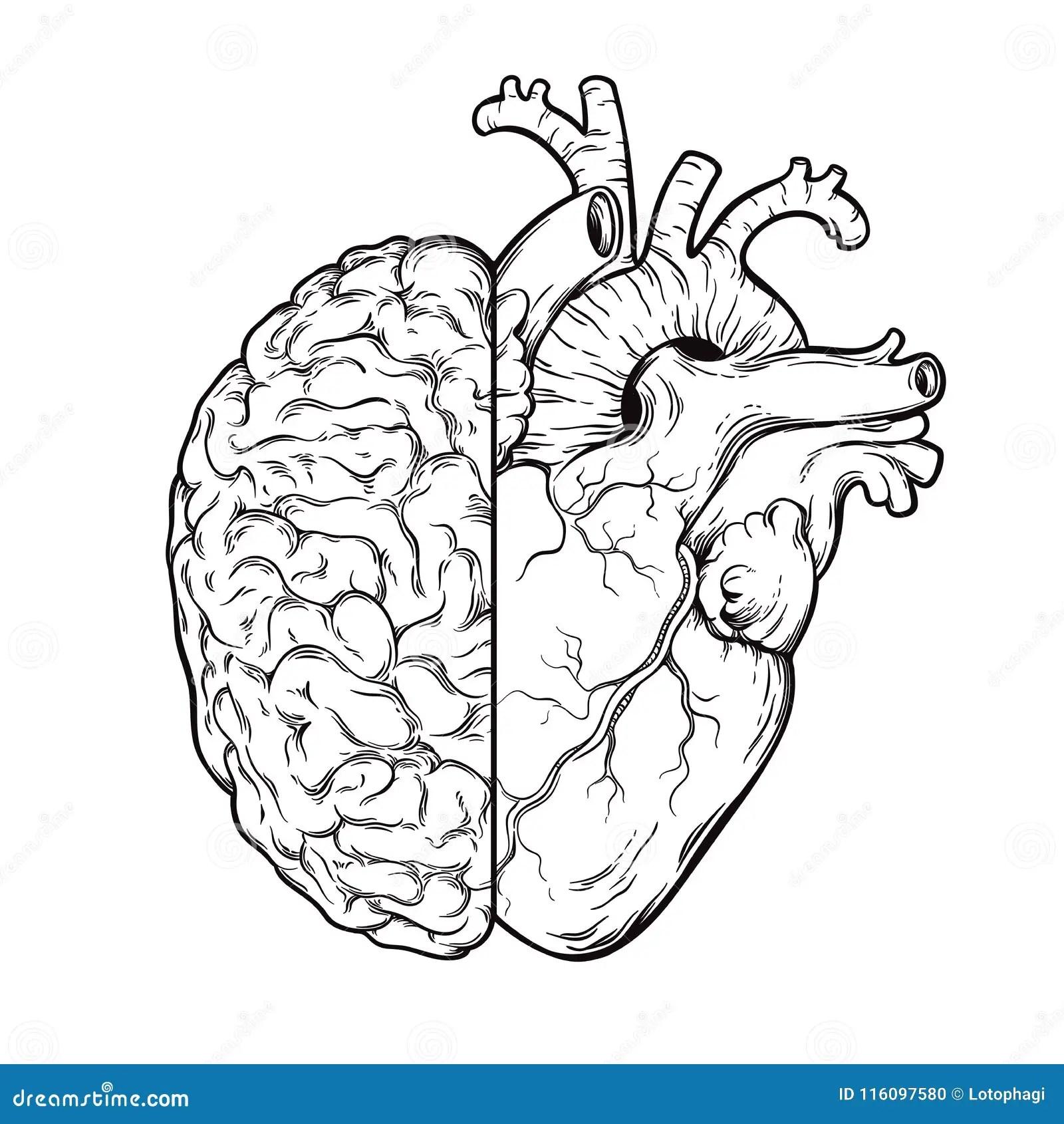 Brain Heart Stock Illustrations 8 244 Brain Heart Stock
