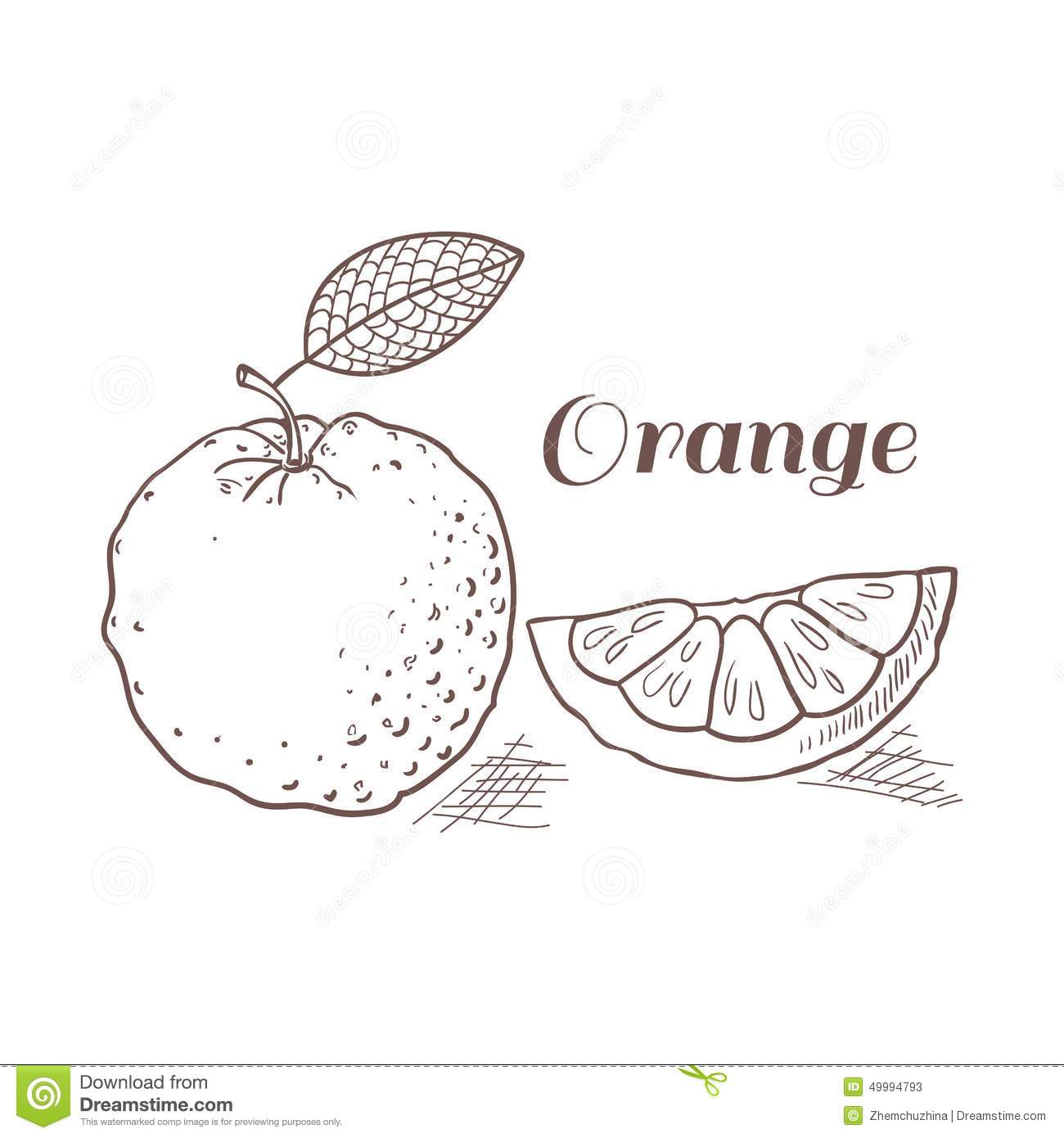 Hand Drawn Orange With Leaf Vector Illustration Stock