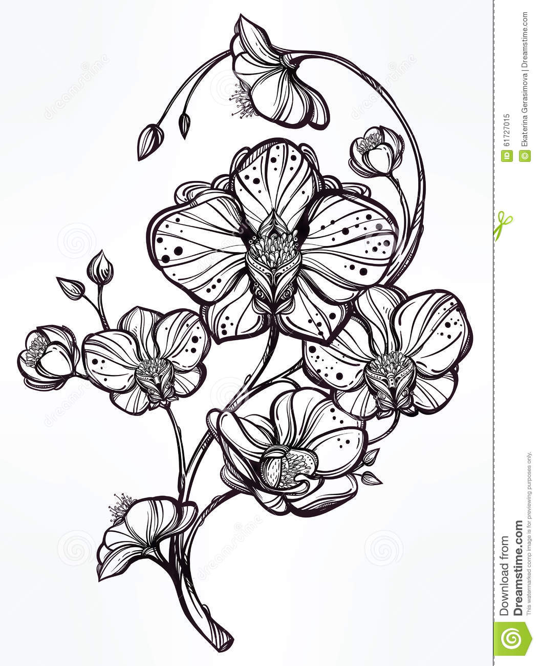 Illustration Of Dicot With Petals