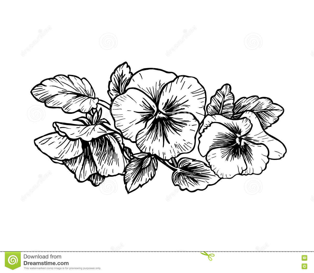 Hand Drawn Pansy Flowers Stock Vector Image Of Monochrome