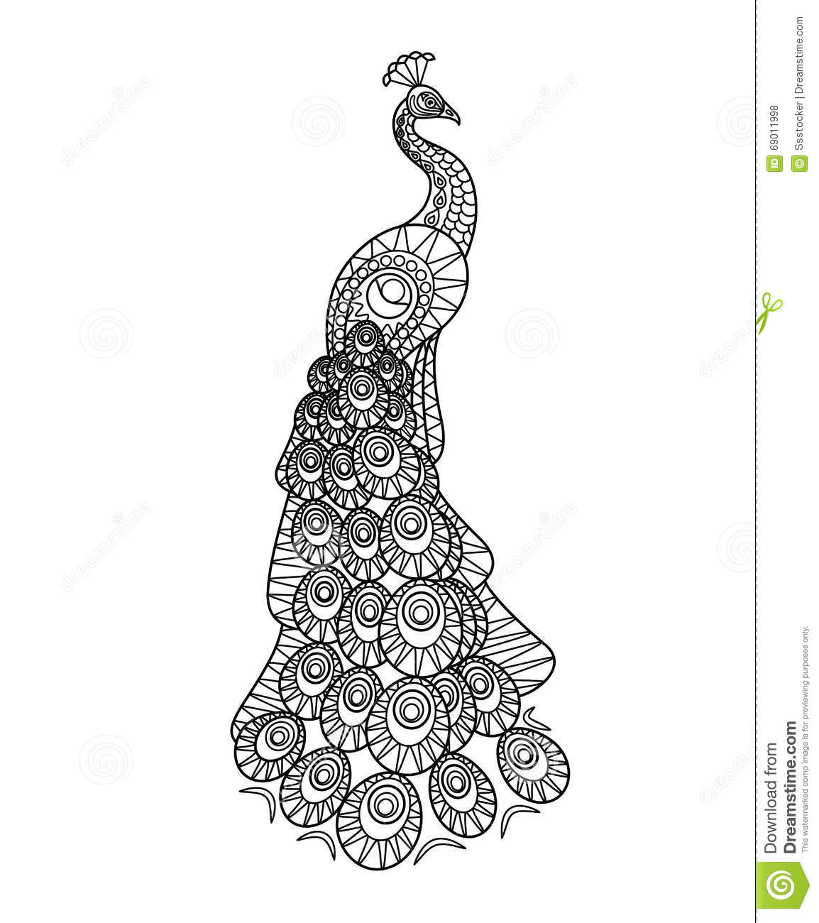 Hand Drawn Peacock Stock Vector Illustration Of Eastern
