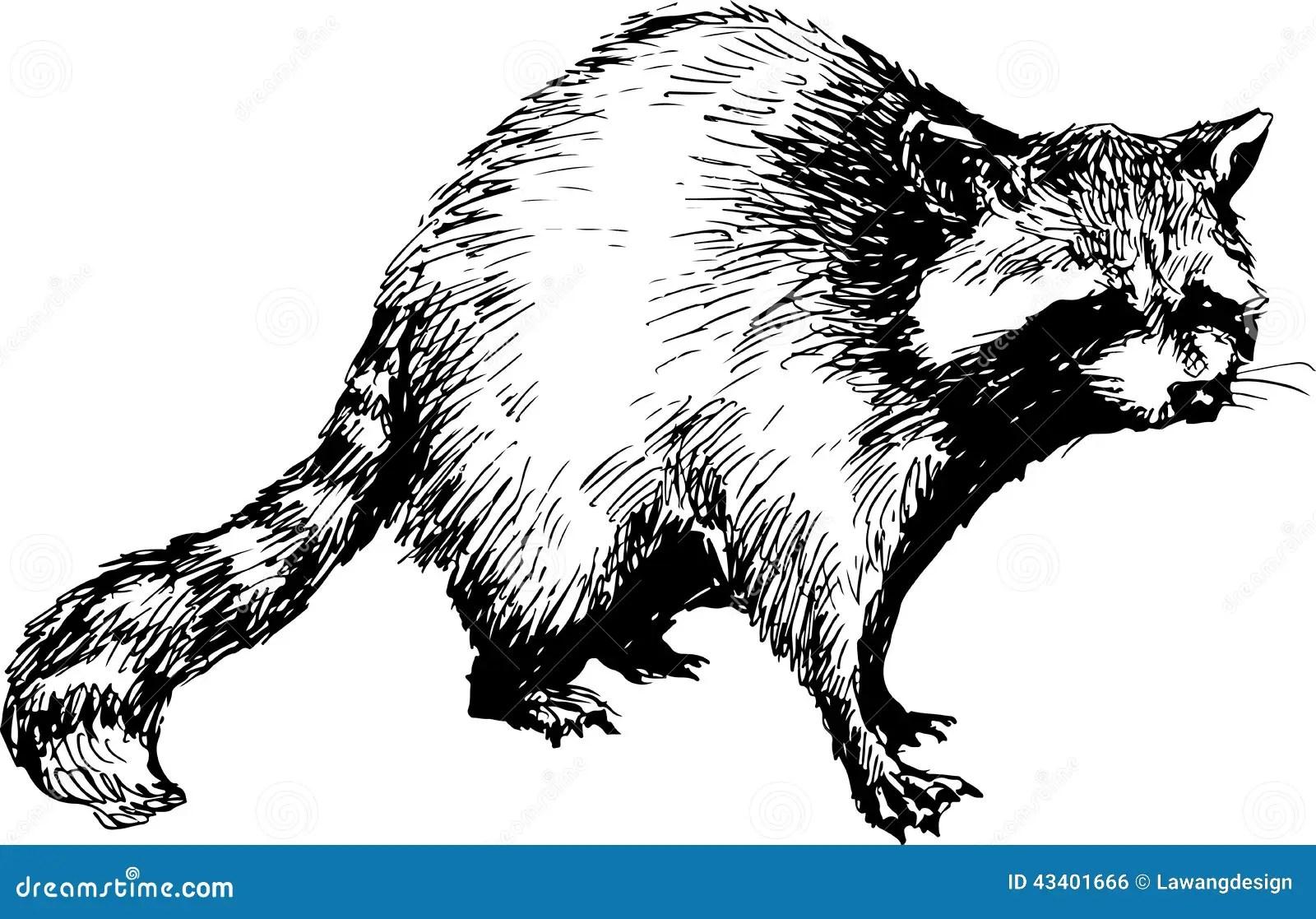 Hand Drawn Raccoon Stock Vector
