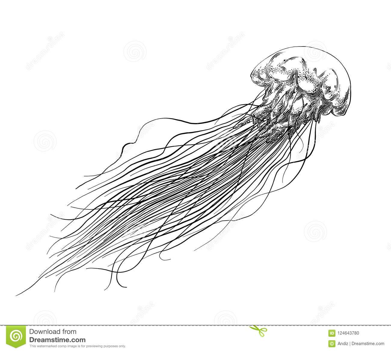 Hand Drawn Sketch Of Jellyfish In Black Isolated On White