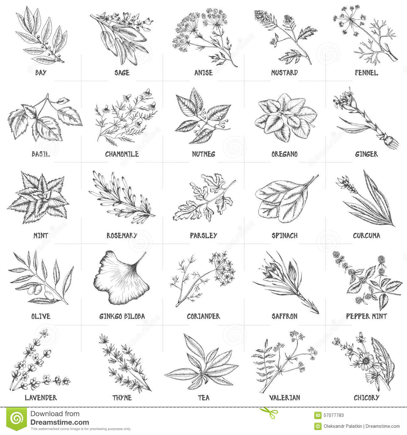 Hand Drawn Vector Set Of Herbs And Spices Vintage Stock