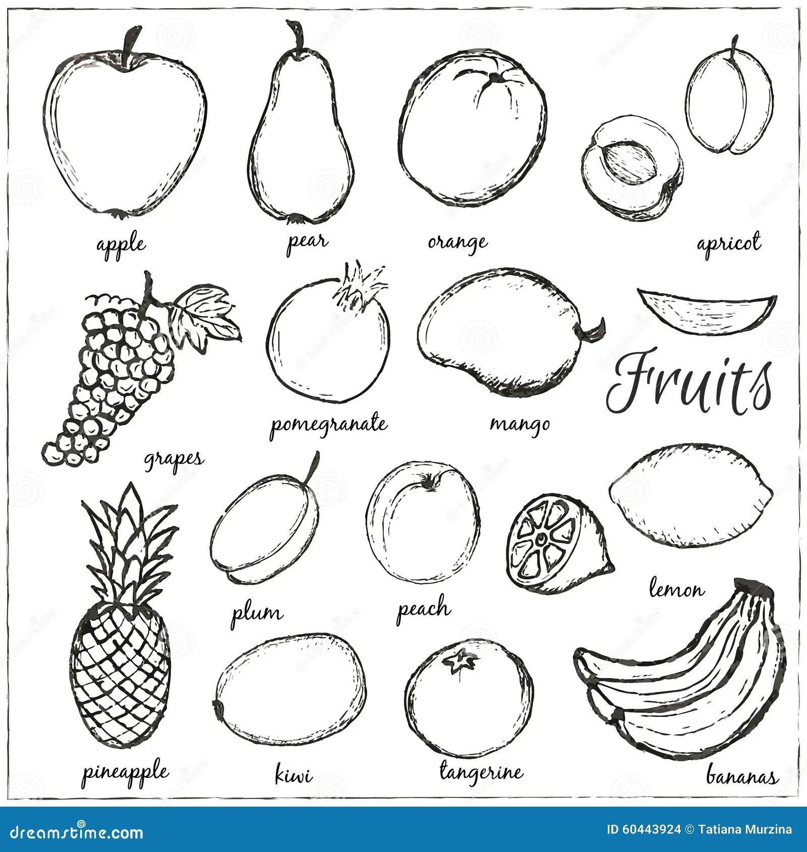 Hand Gezeichnete Gekritzel Fruchte Mit Namen Vektor
