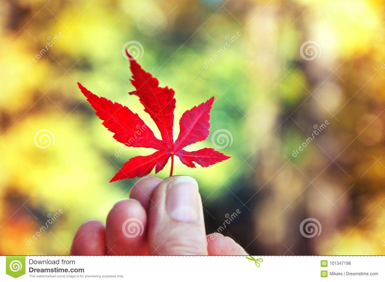 Hand Holding Red Leaf On Autumn Yellow Sunny Background