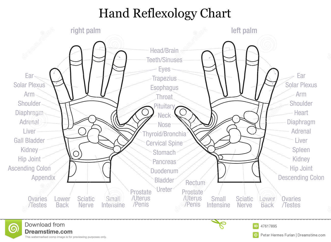 Hand Reflexology Chart Description Outline Stock Vector