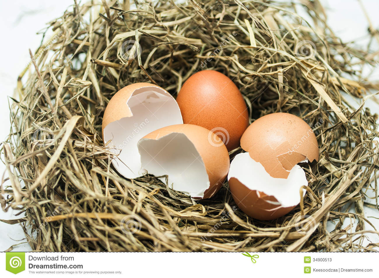 Hatched Egg Stock Image Image Of Animal Bird Hatched