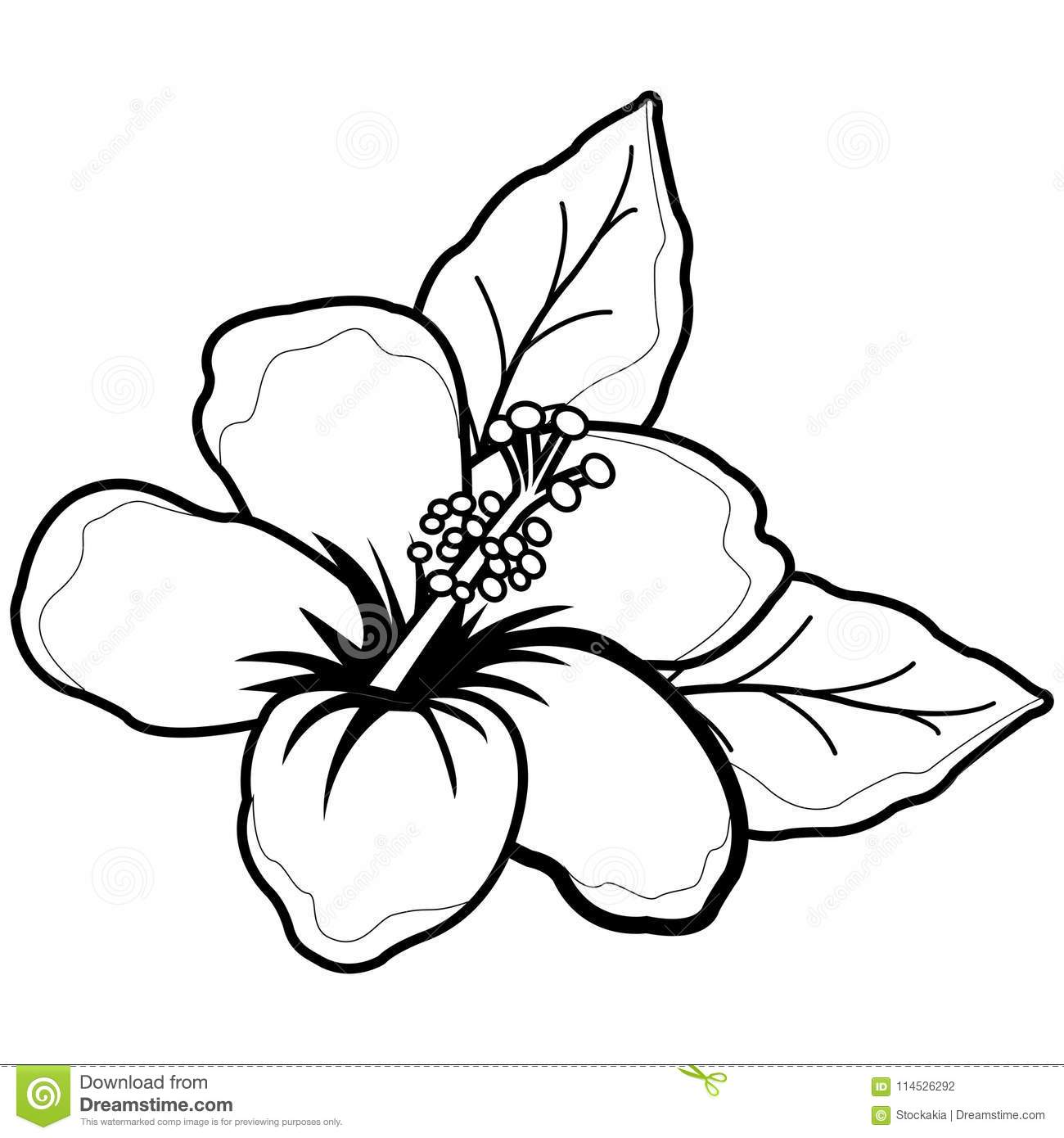 Hawaiian Hibiscus Flower Black And White Coloring Book