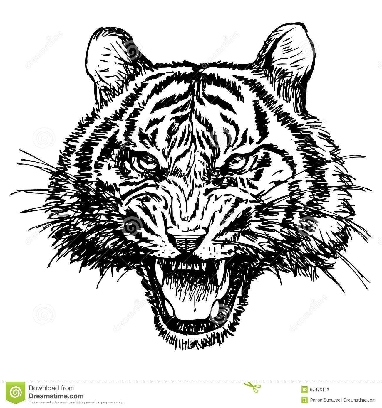 Head Of Angry Tiger Hand Drawn Stock Vector