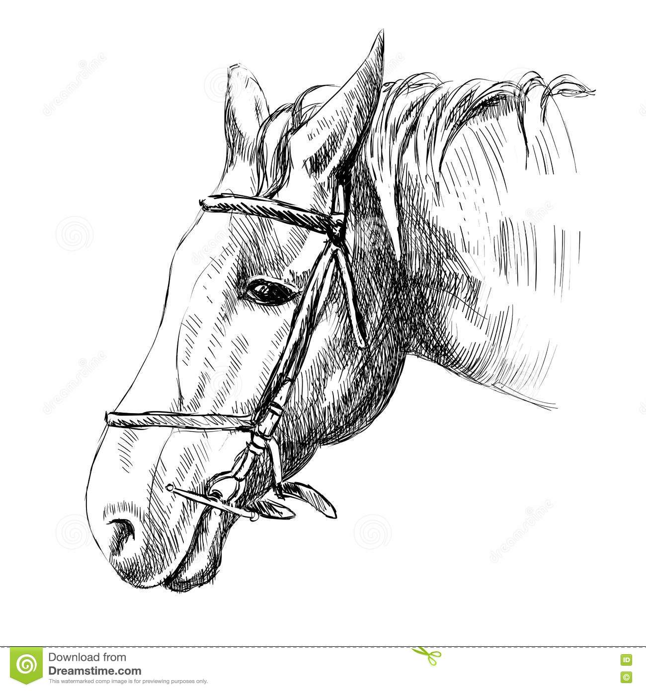 A Horse Harness