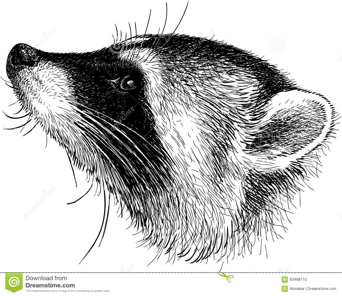 Head Of Raccoon Stock Vector