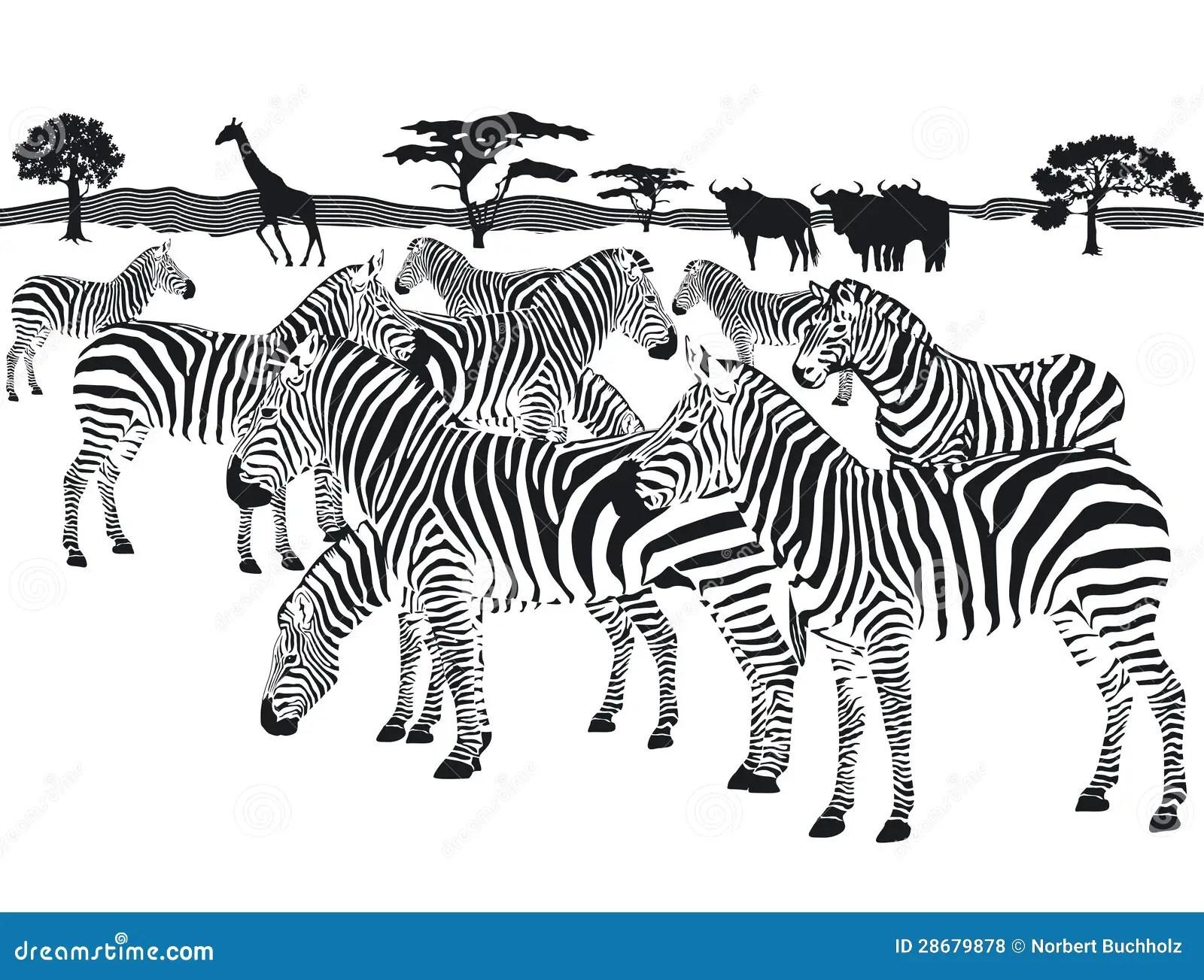Herd Of Zebras Stock Vector Illustration Of Stripe