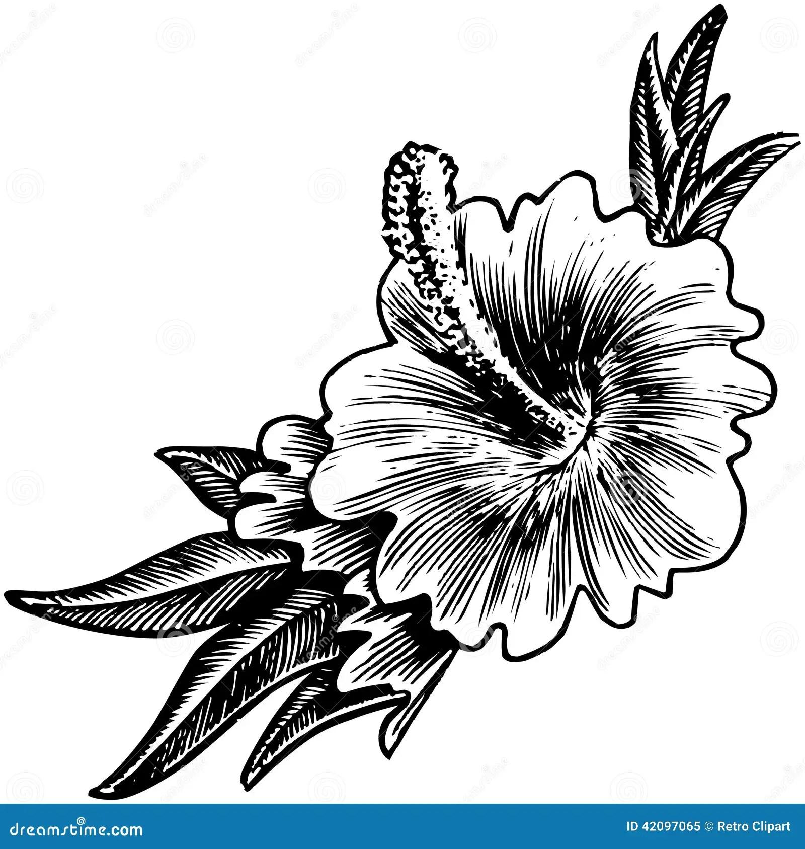 Tropical Hibiscus Flowers Eps Cartoon Vector