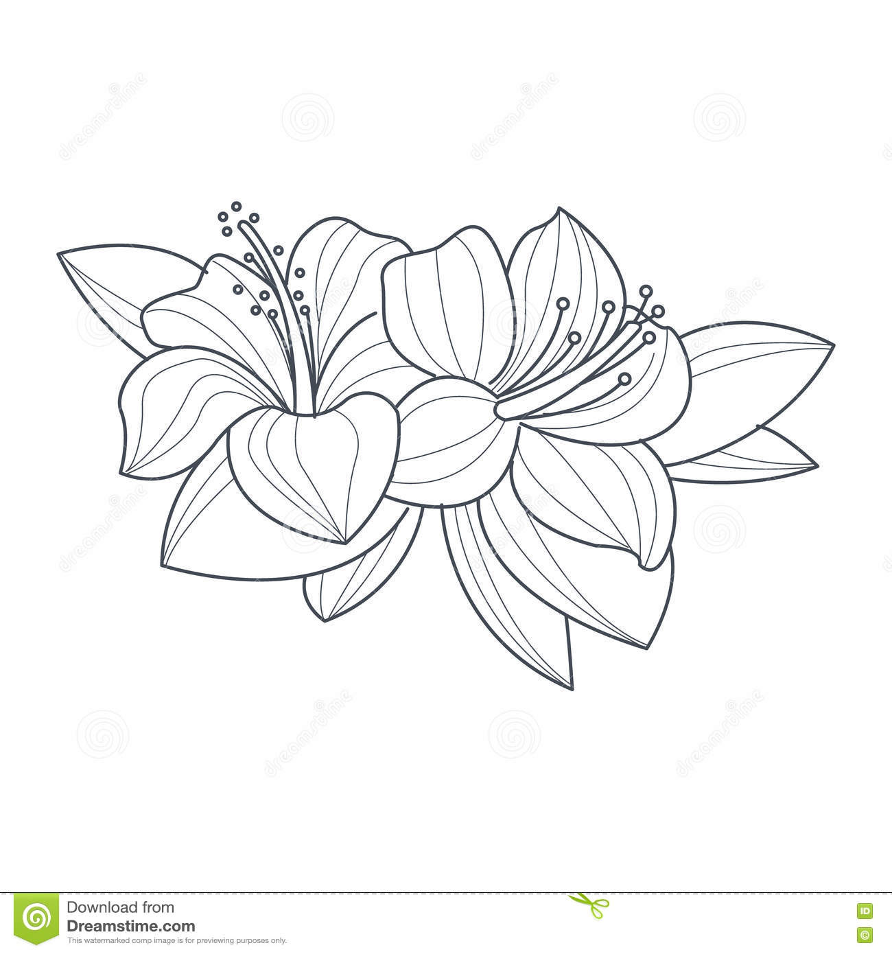 Puerto Rico Hibiscus Coloring Page