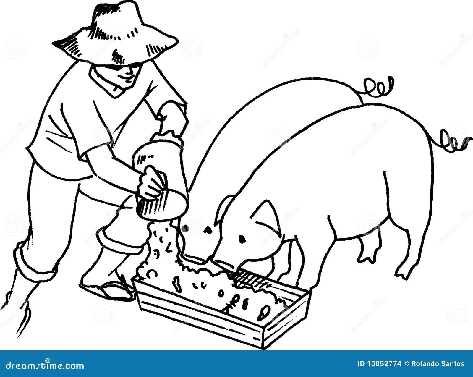 Hog Feeding Stock Images