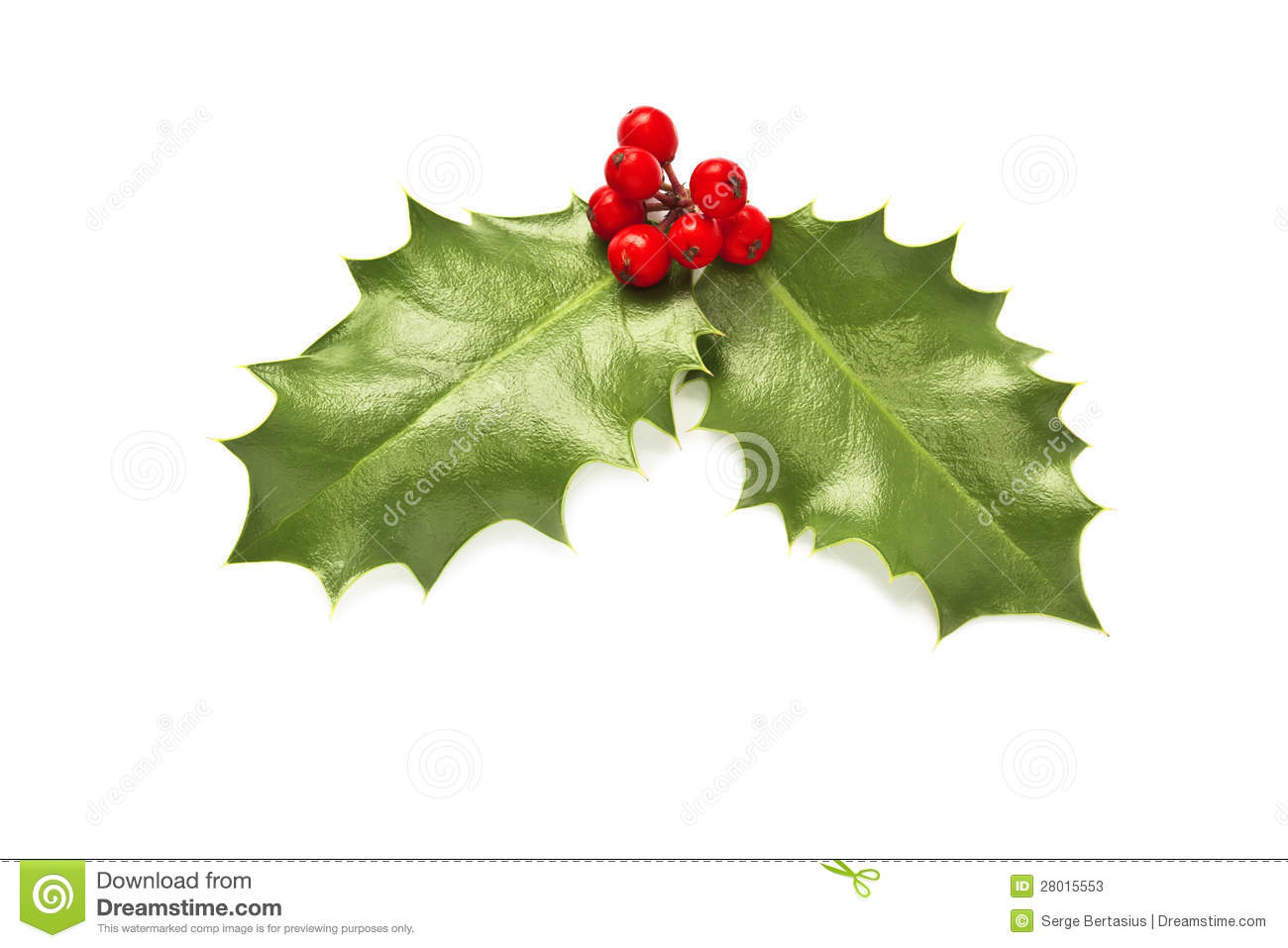 Holly Leaves And Berries Stock Photos Image 28015553