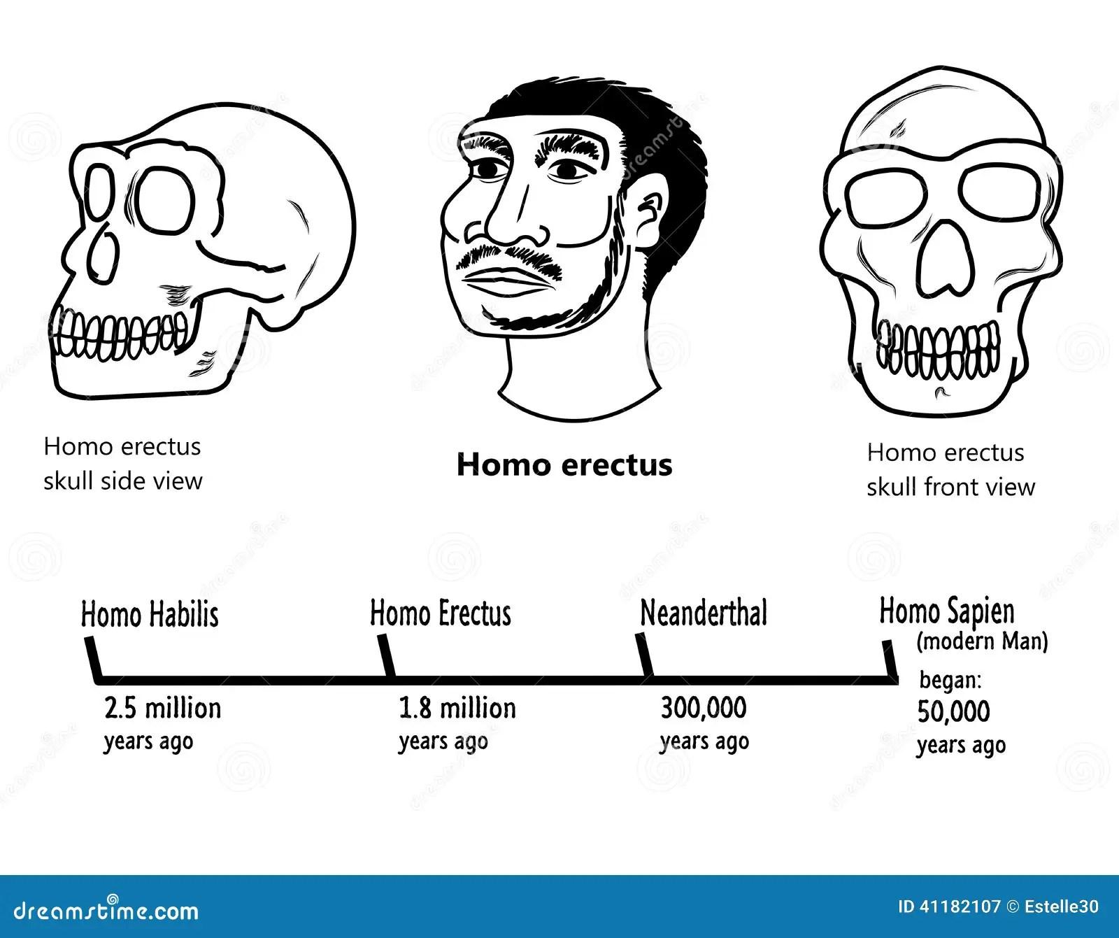 Early Man Evolution Chart