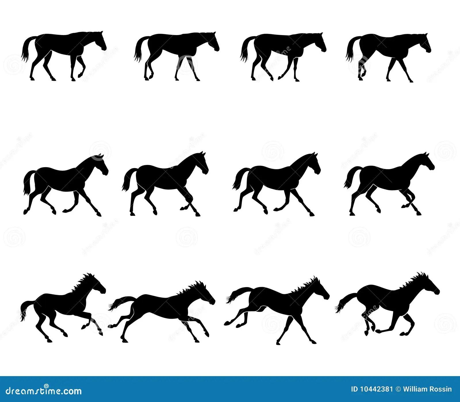 Horse Gaits Stock Vector Illustration Of Walk Trot