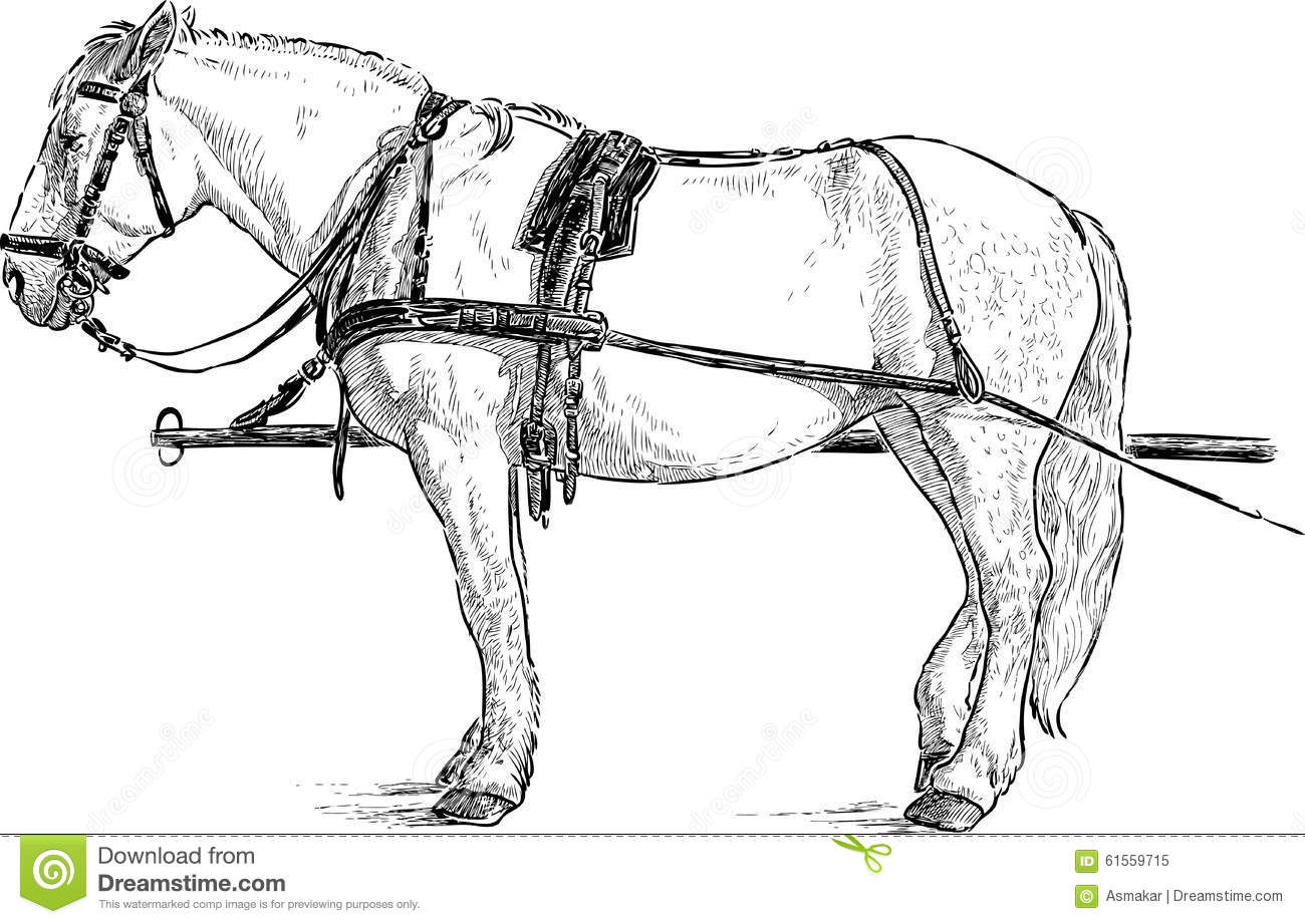 Horse In The Harness Stock Vector Illustration Of Hand