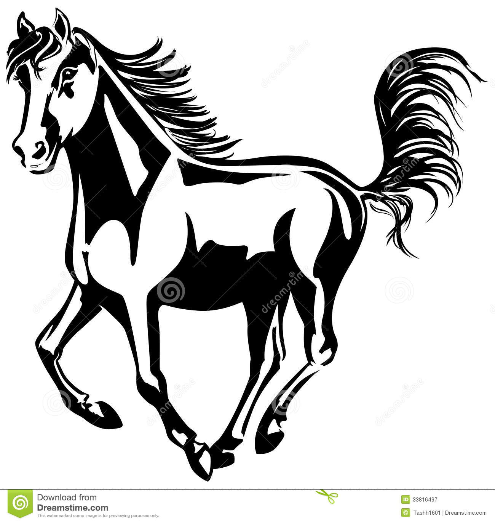 Horse Runs Stock Image Image Of Horse Mustang Domestic