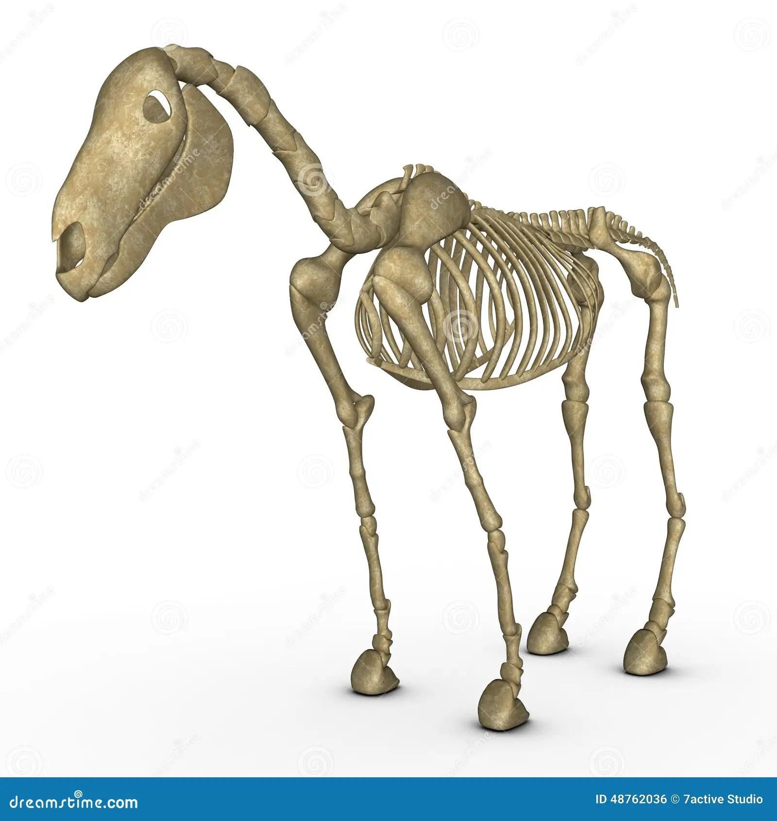 Horse Skeleton Stock Illustration Illustration Of