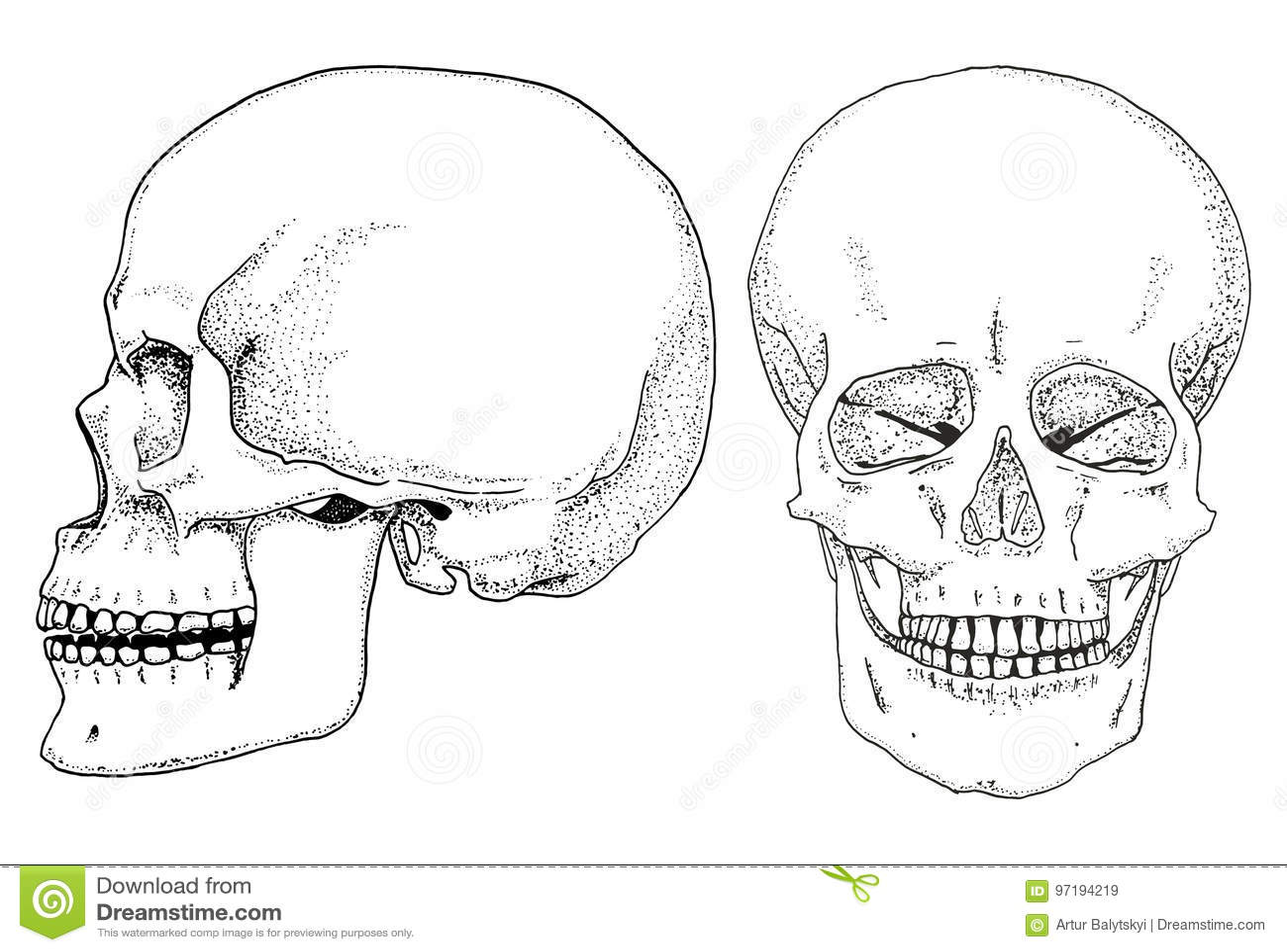 Human Biology Anatomy Illustration Engraved Hand Drawn