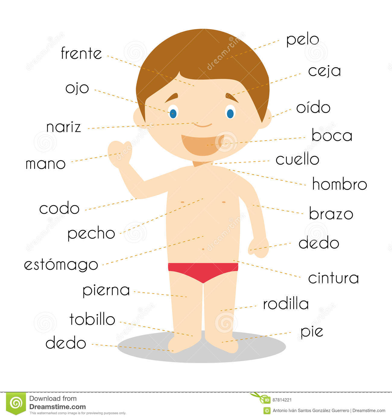 Human Body Parts Vocabulary In Spanish Vector Illustration