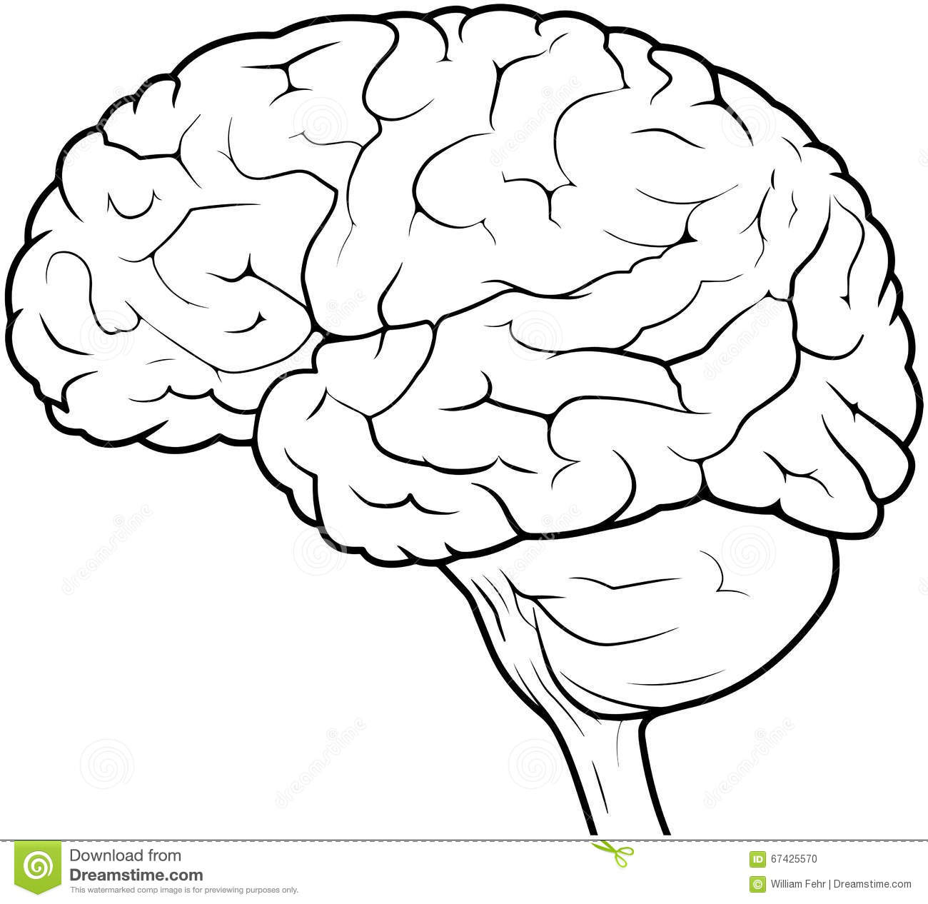 Human Brain Drawing Stock Illustration Illustration Of