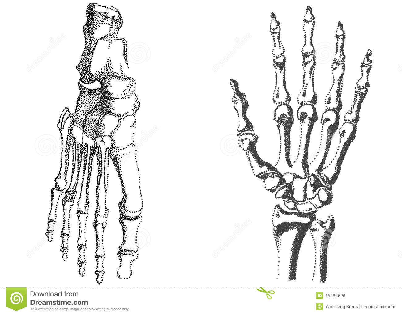 Human Hand And Foot Royalty Free Stock Image