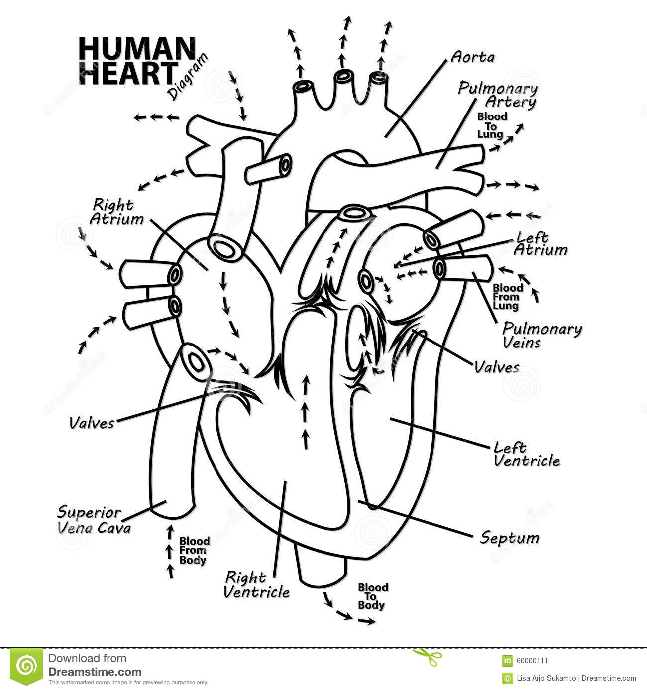 Pulmonary Circulation Coloring Page Sketch Coloring Page