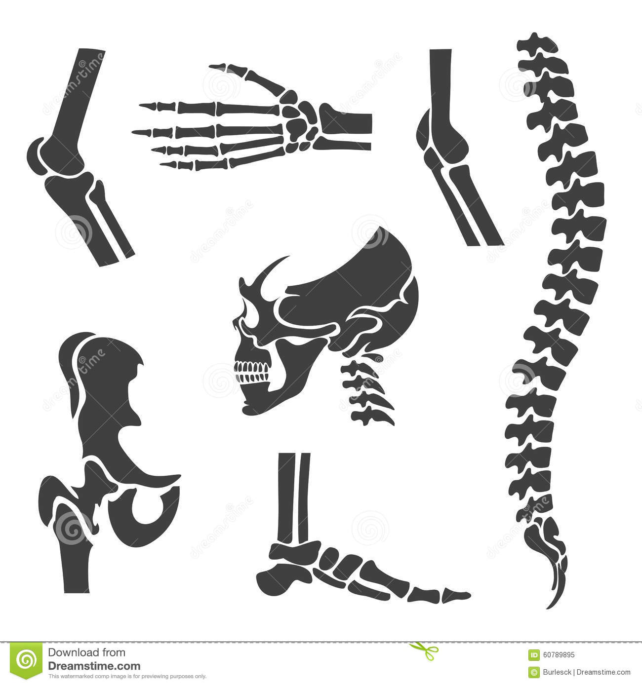 Human Joints Vector Set Orthopedic And Spine Stock Vector