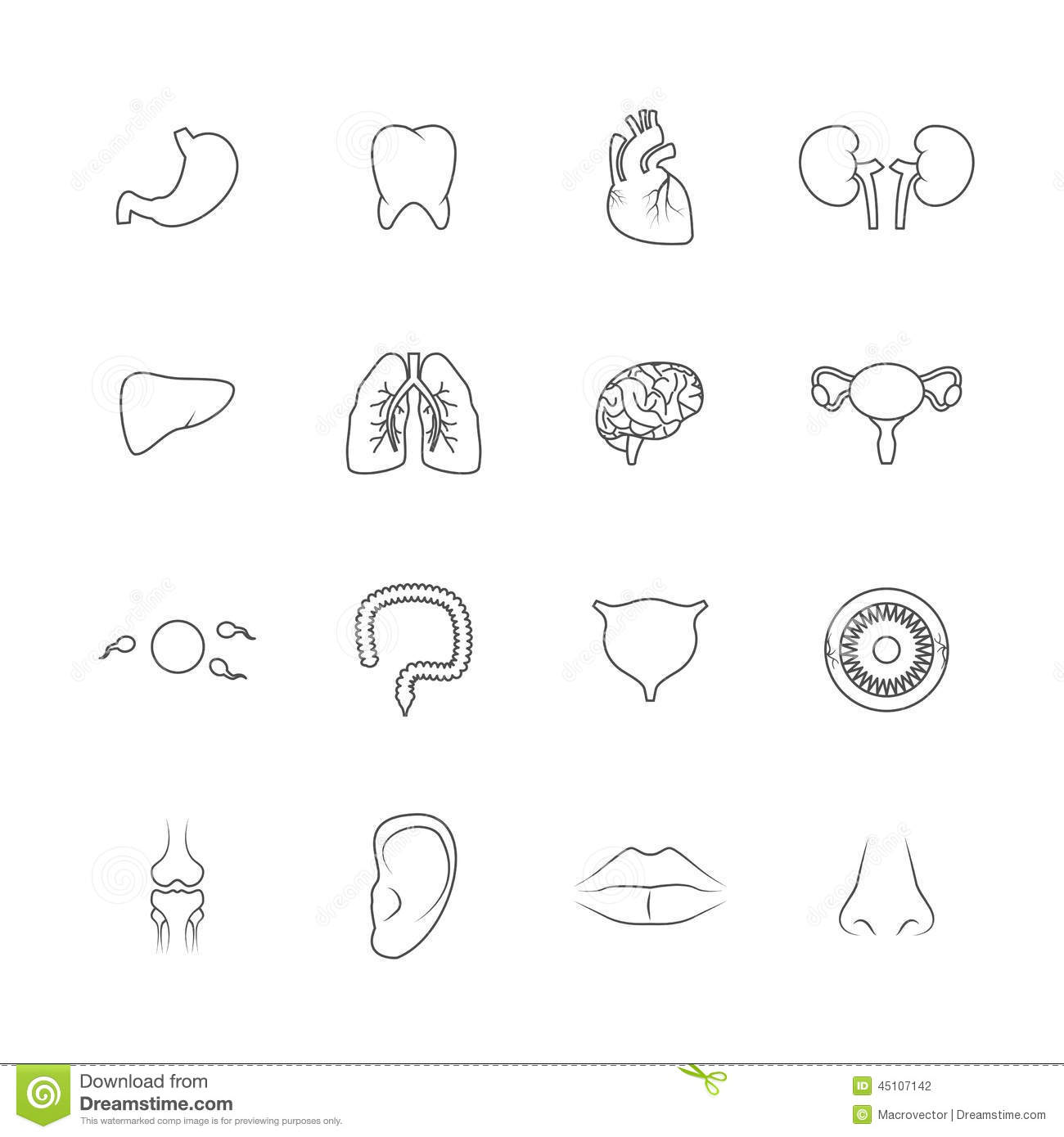 Human Organs Icons Outline Stock Vector