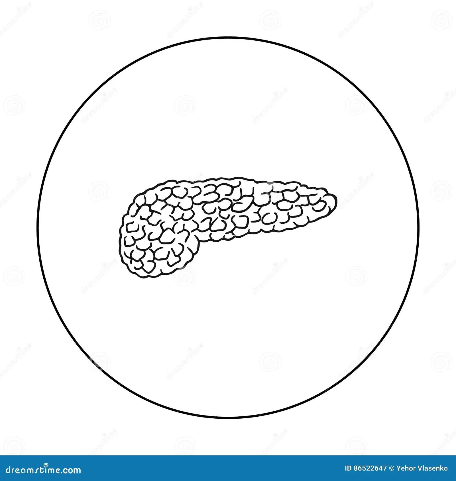 Pancreas On White Vector Illustration
